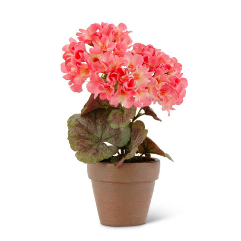 9 inch Pink Geranium in pot