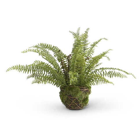 "27"" Boston Fern in Moss and Twig Basket"
