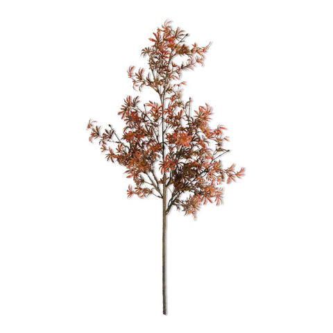 30 Inch Fall Japanese Maple Stem