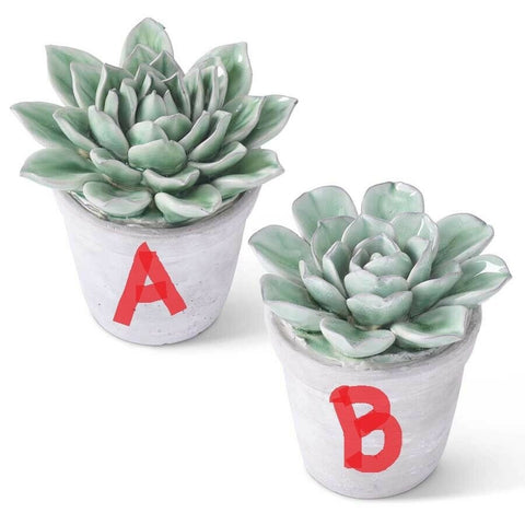 "5.5"" Dark Green Ceramic Round Petal Succulents in Gray Pot! TWO STYLES!"