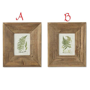 "14.5"" Fern Prints In Wood Frame (Also Holds Photo)! TWO STYLES!"