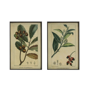 Metal Framed Wall Decor w/ Vintage Reproduction Botanical Print! Two Styles!