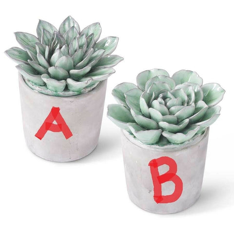 "6.5"" Dark Green Ceramic Round Petal Succulents in Gray Pot! TWO STYLES!"
