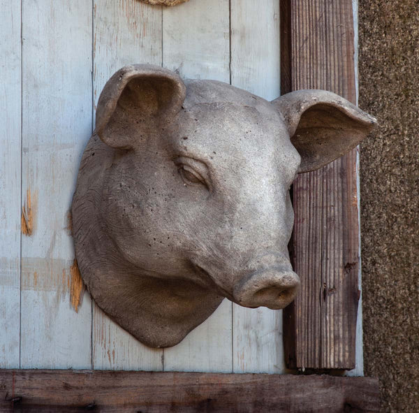 Wall Mount Pig Head