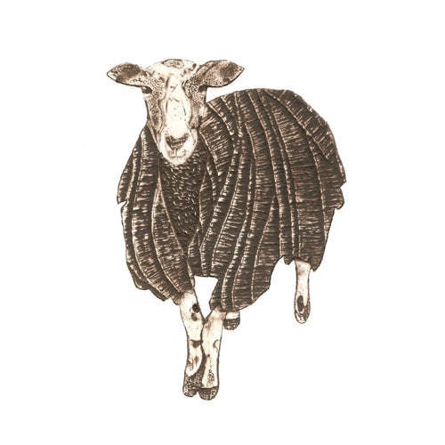 Wildshed limited edition print - sheep