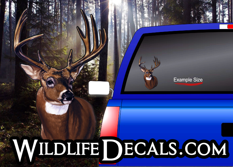 whitetail head mount deer buck decal