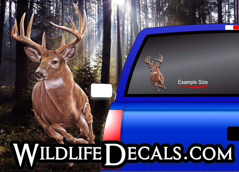 whitetail buck deer decal