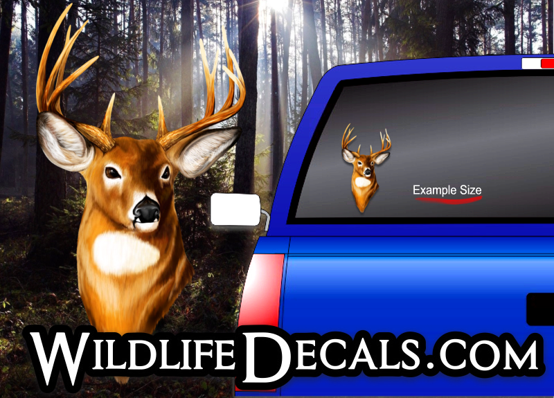 whitetail deer buck head decal
