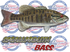 Smallmouth Bass full color vinyl fish decal sticker