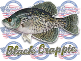 Black Crappie full color vinyl fish decal sticker