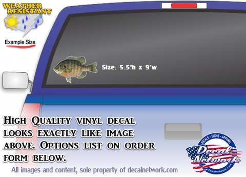 Bluegill fish full color vinyl decal