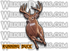 Running whitetail buck deer vinyl decal