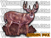 Deer Standing Whitetail Buck Decal