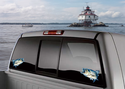 Image of Striped Bass Rock fish full color fish decal