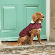Quilted Waterproof Dog Jacket with Sherpa Fleece Collar in Merlot