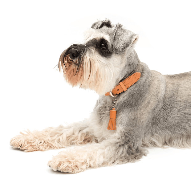 Camello Italian Leather and Gray Tweed Dog Collar - This Dog's Life