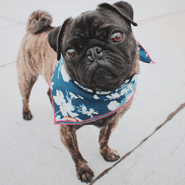 Denim Rose Bandana