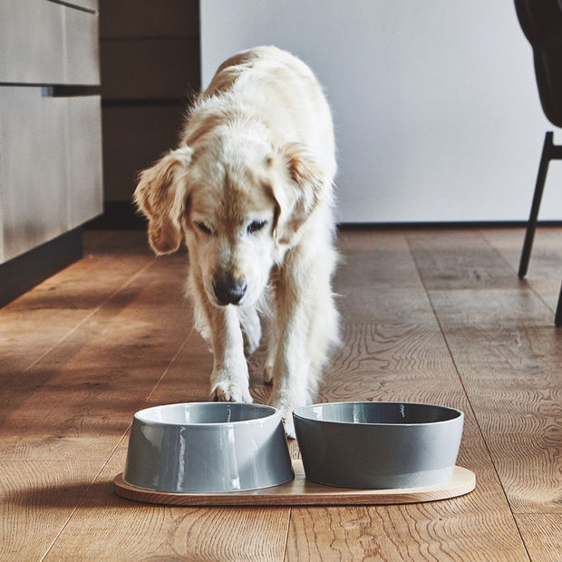 Inverted Ceramic Dog Bowl Set in Teal Blue