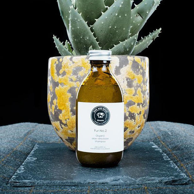 Organic Aloe Vera Dog Shampoo - This Dog's Life