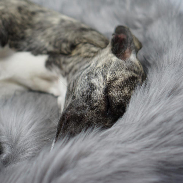 Ultimate Super Soft Faux Fur Dog Blanket - This Dog's Life