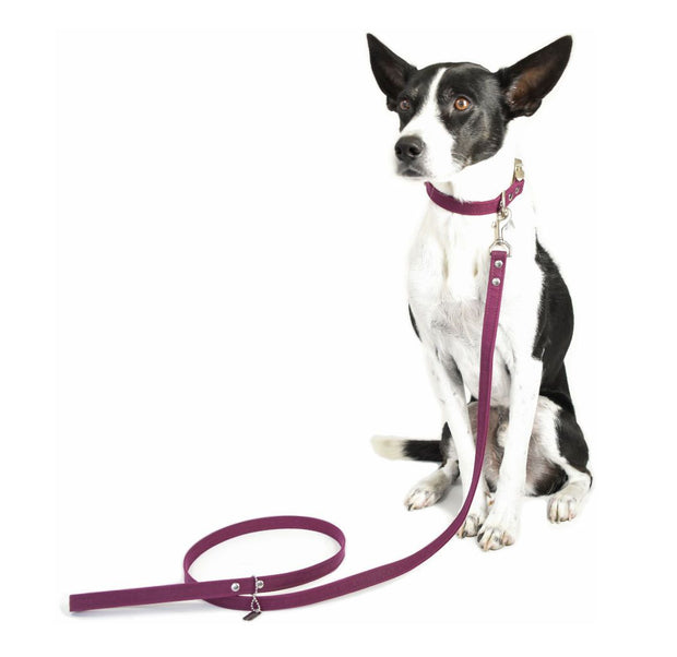 Vegan Eco-Friendly Canvas Leash in Forest Green - This Dog's Life