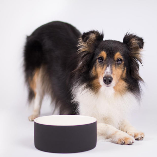 Antibacterial Natural Cooling Dog Water Bowl in Ebony - This Dog's Life