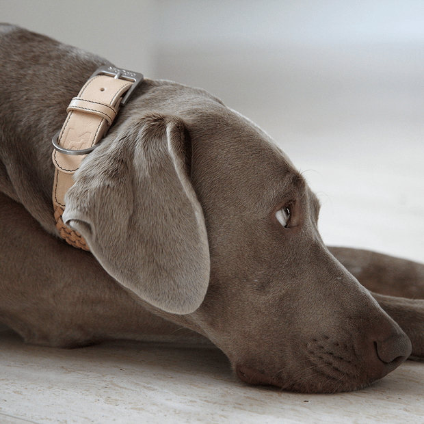 Braided Venezia Italian Leather Collar in Tan - This Dog's Life