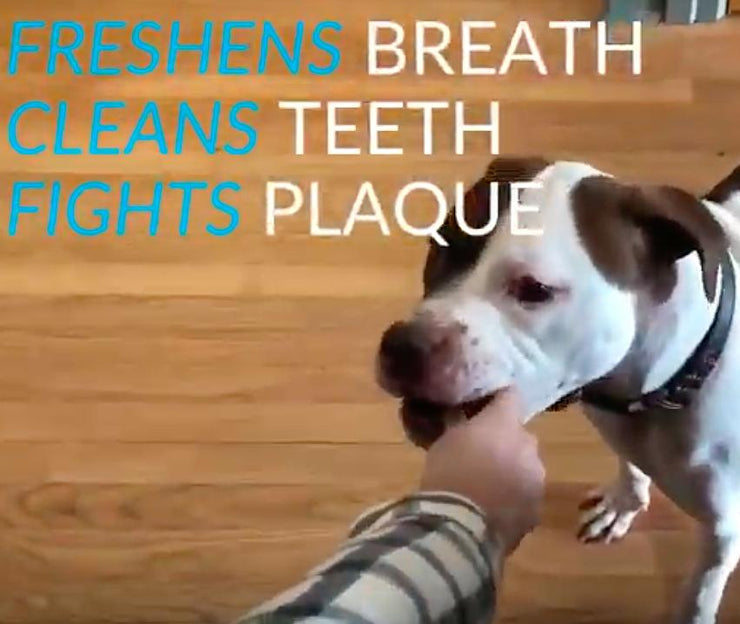 25% Off Your First Order <br>Bye, Bye Dog Breath Dental Sticks - This Dog's Life