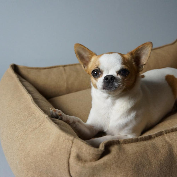 Luxury Modern Dog Bed in Nutmeg - This Dog's Life