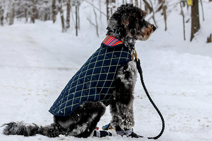 Peruvian Dog Jacket with Faux Lambswool Lining in Navy and Emerald