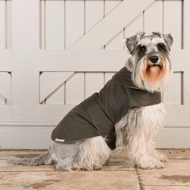 Waterproof Waxed Dog Coat in Olive - This Dog's Life