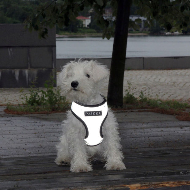 Reflective High-Visibility Harness in Steel Gray - This Dog's Life