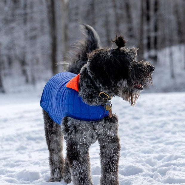 Reversible Waterproof Quilted Dog Jacket in Royal Blue and Bright Orange