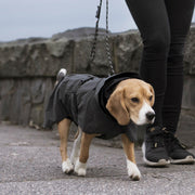 Reflective High-Visibility Leash in Steel Gray - This Dog's Life
