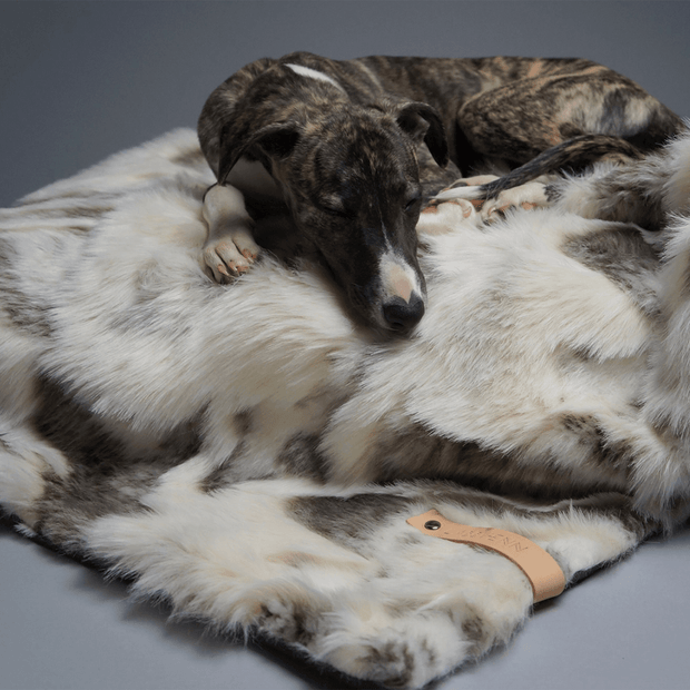 Faux Fur Luxury Dog Blanket in Print - This Dog's Life