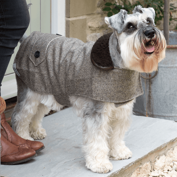 Herringbone Tweed Brown Jacket - This Dog's Life