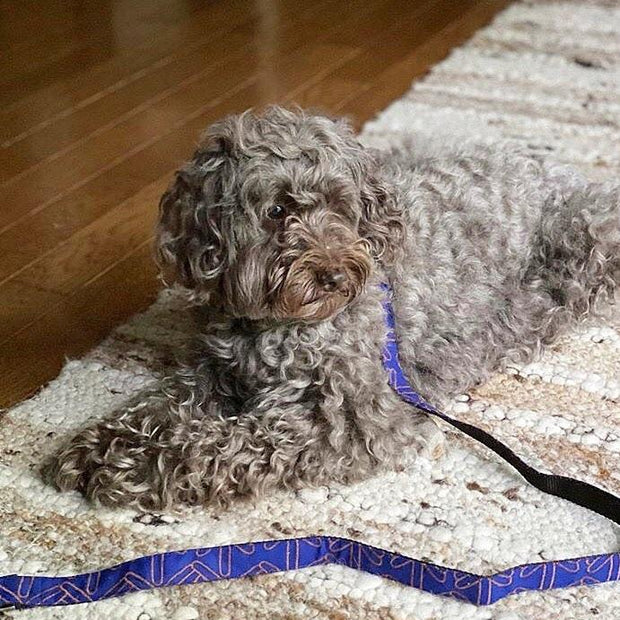 Wool Blend Leash in Royal Blue Pattern - This Dog's Life