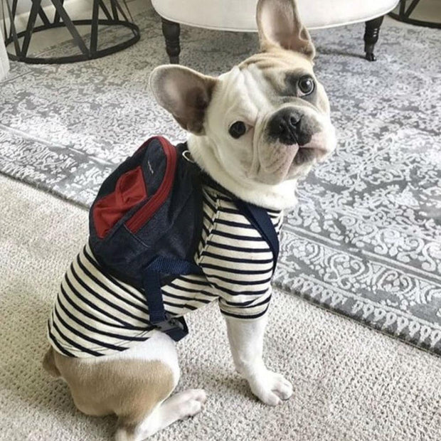 Canvas Mini Dog Backpack in Red and Navy - This Dog's Life