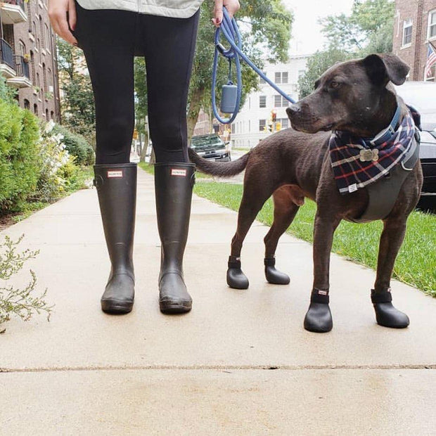WagWellies Dog Rubber Rain Booties in Ebony Black - This Dog's Life