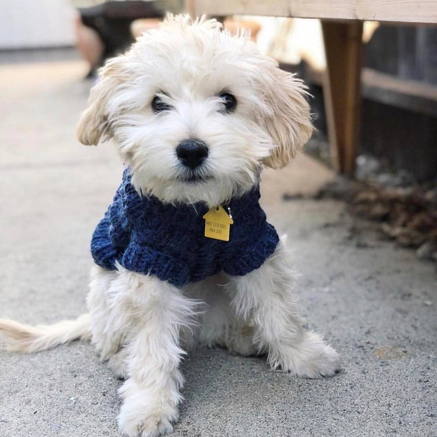 Wool Dog Sweater in Navy Blue - This Dog's Life
