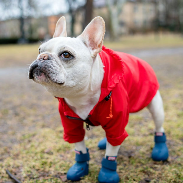 WagWellies Dog Rubber Rain Booties in Cherry Red - This Dog's Life