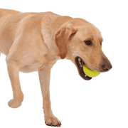 Non-Toxic Ball and Bone Toy Super Pack