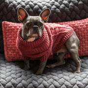 Hand-Knit Wool Dog Sweater in Scarlet