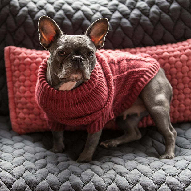 Hand-Knit Wool Dog Sweater in Scarlet - This Dog's Life