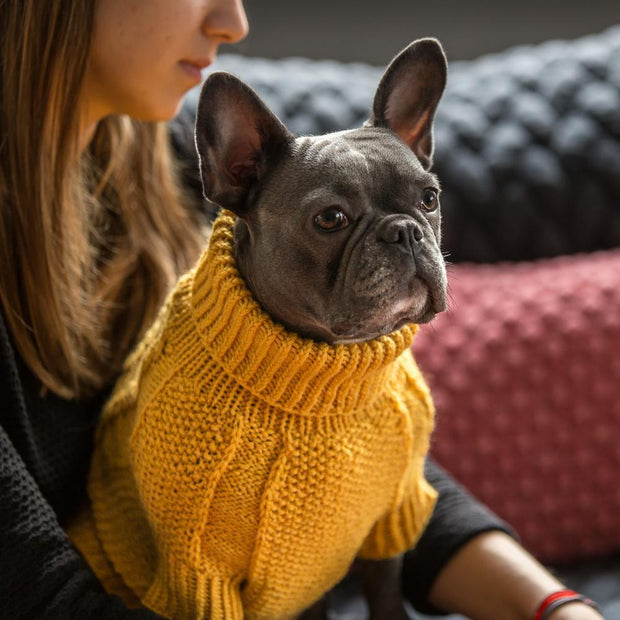 Hand-Knit Wool Dog Sweater in Noir - This Dog's Life