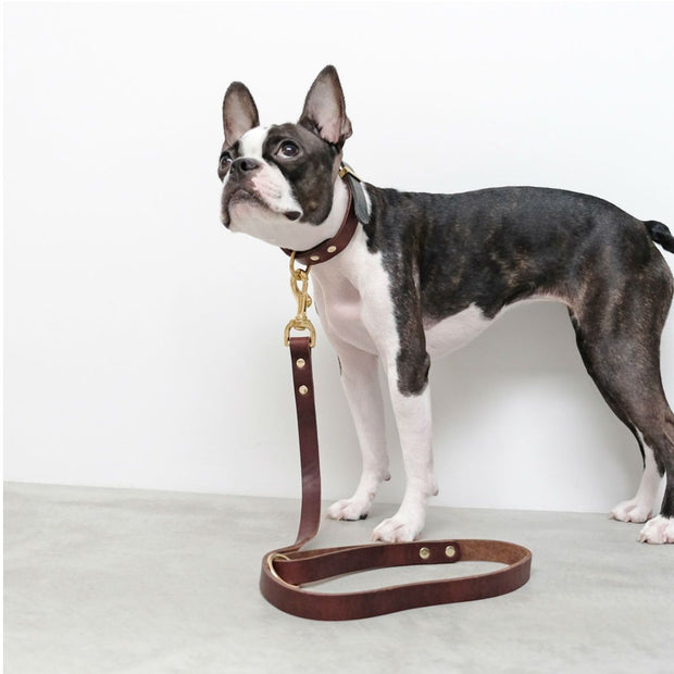 Two-Tone Leather Collar in Black and Brown - This Dog's Life