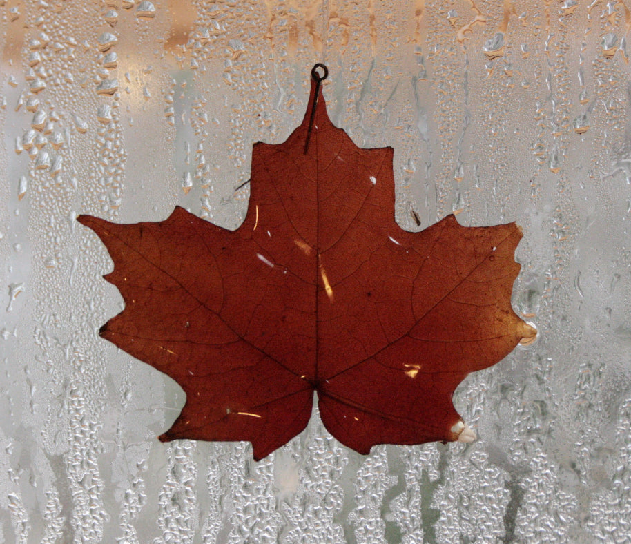 It's Maple Sugar Season!