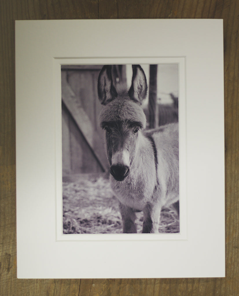 Photography - Baby Donkey Haircut