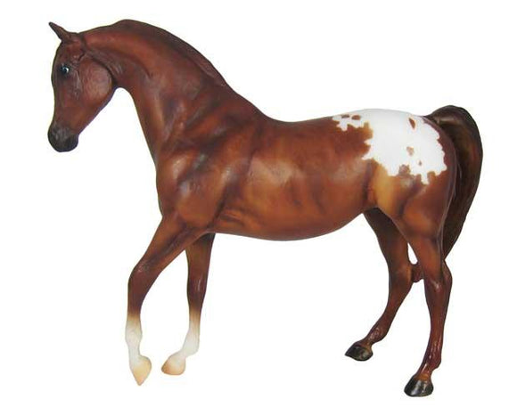Chestnut Appaloosa