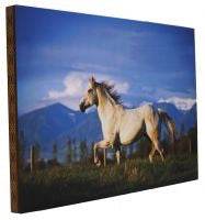 Denver Bryan running horse canvas